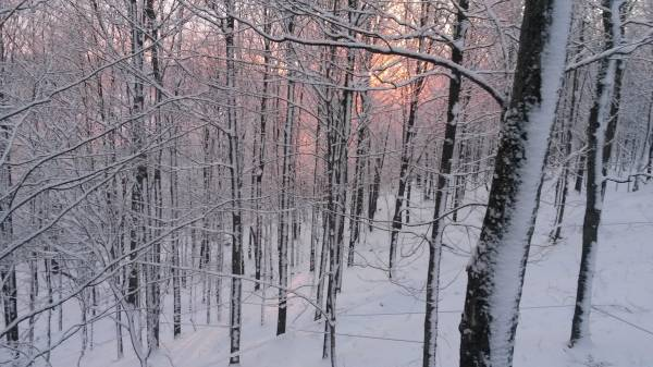 Sunrise Maple lines!